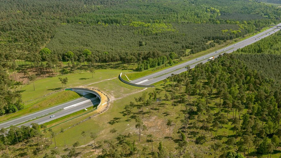 Wildlife campaigners are trying to get wildlife bridges - like this one in Germany - to widen the cougars' range (Credit: Alamy)