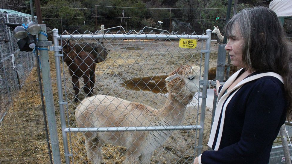 Victoria Vaughn-Perling has tried to keep her animals safe behind enclosures (Credit: Adam Popescu)