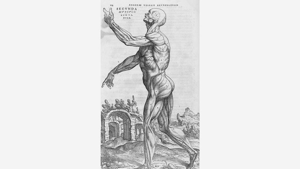 An engraving from the 1543 anatomy textbook De humani corporis fabrica with human musculature in front of ancient ruins, which were seen as a reminder of decay (Credit: Wikimedia)
