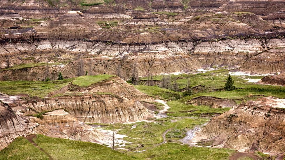 The sand and mud deposits of Canada's Badlands quickly buried bones, making the area one of the world's richest hunting grounds for dinosaur fossils (Credit: Getty)