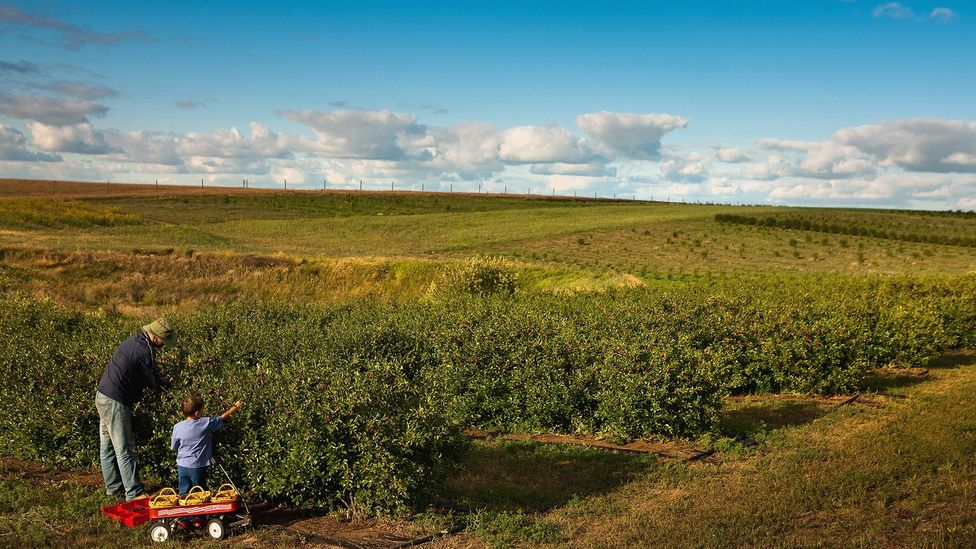The story of the prairie cherry inspired Dean Kreutzer, owner of Over the Hill Orchards (pictured), to learn to breed fruit (Credit: Greg Huszar Photography/Tourism Saskatchewan)
