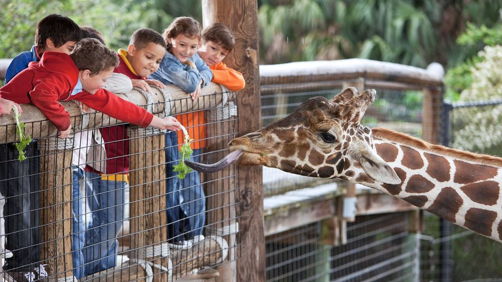 Now animals are the stars of zoos, but in the future the emphasis could be on cloning technology instead (Credit: Getty Images)