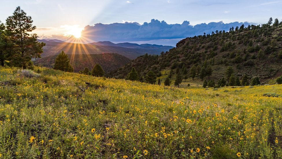 Zoll believes the Sunagua people created the calendar to mark religious ceremonies and track their crops' growing seasons (Credit: U.S. Forest Service Coconino National Forest)