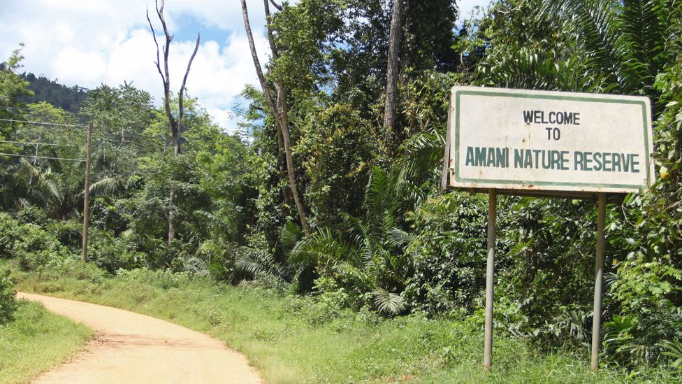 The road to the Amani Hill Research Station (Credit: Rachel Nuwer)