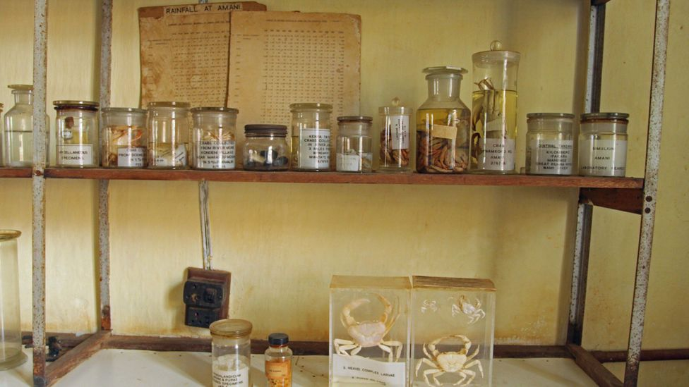 Jars and specimens of creatures studied in the Amani laboratory (Credit: Rachel Nuwer)
