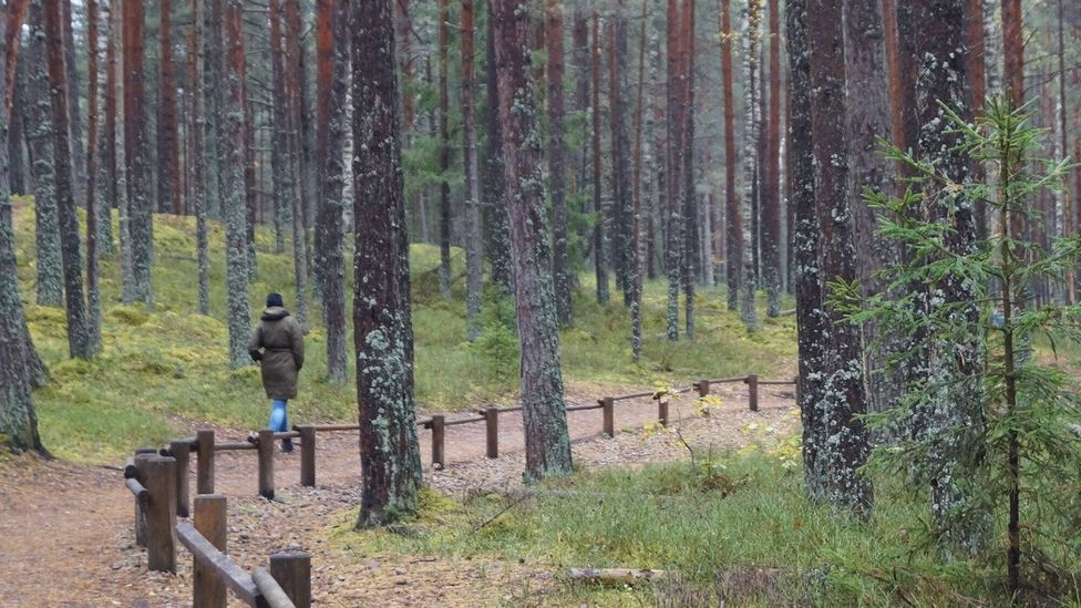 A woman walks through a forest in Latvia
