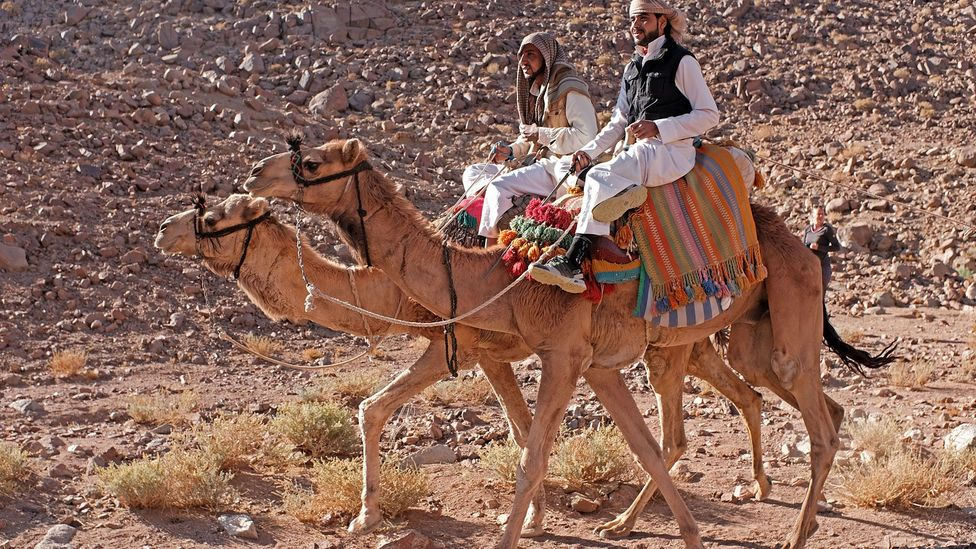 Members of Bedouin tribes have long escorted pilgrims across the Sinai (Credit: Clodagh Kinsella)