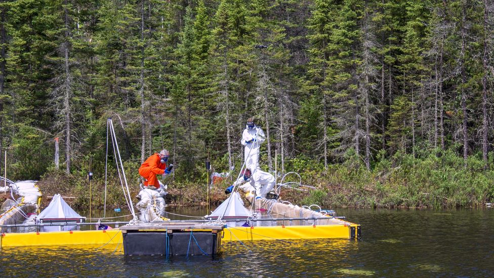 Researchers drop bitumen into a Canadian lake in the Forest study, unrelated to Boreal (Credit: IISD Experimental Lakes Area)
