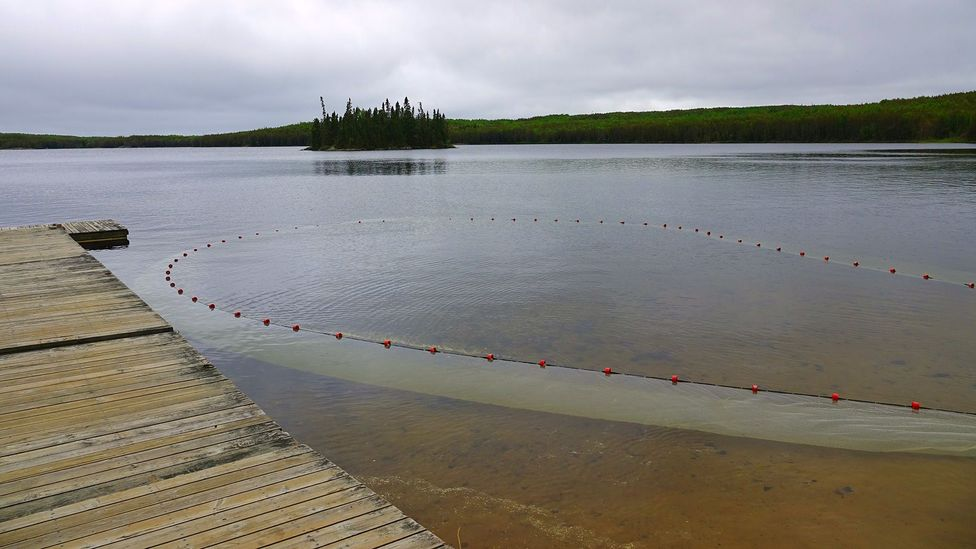 A fishing net is used to sample fish populations in an unaffected IISD-ELA lake
