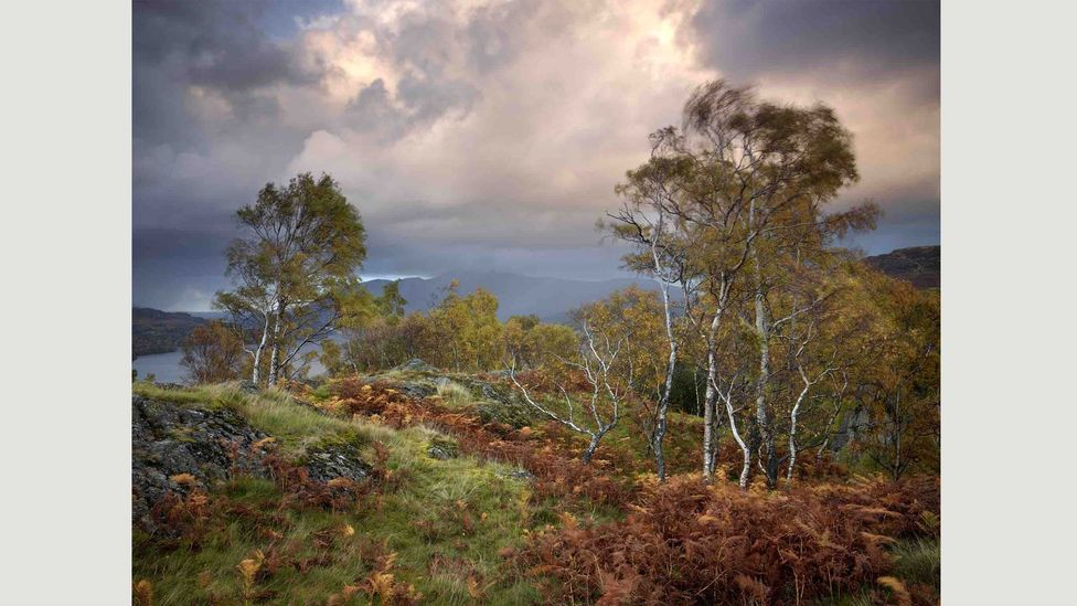 Borrowdale, Cumbria, UK: Photographer Joe Cornish says that this image is influenced by John Constable, the wind movement in the trees echoing brush strokes (Credit: Joe Cornish)