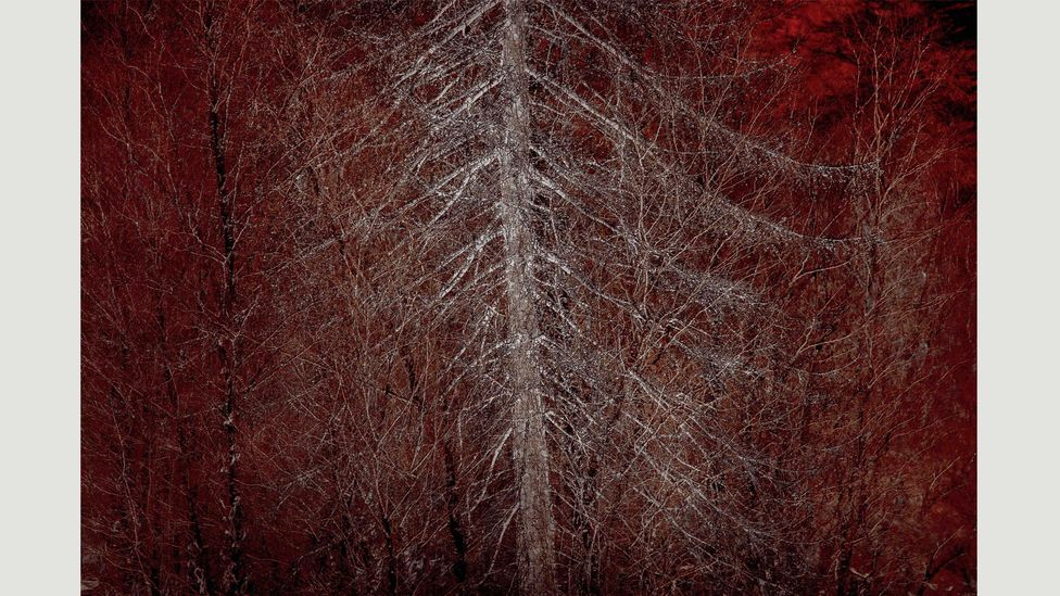 """""""I was drawn to the tree's shape, along with the wonderful soft greys in the bark"""" – Doug Chinnery (Credit: Doug Chinnery)"""