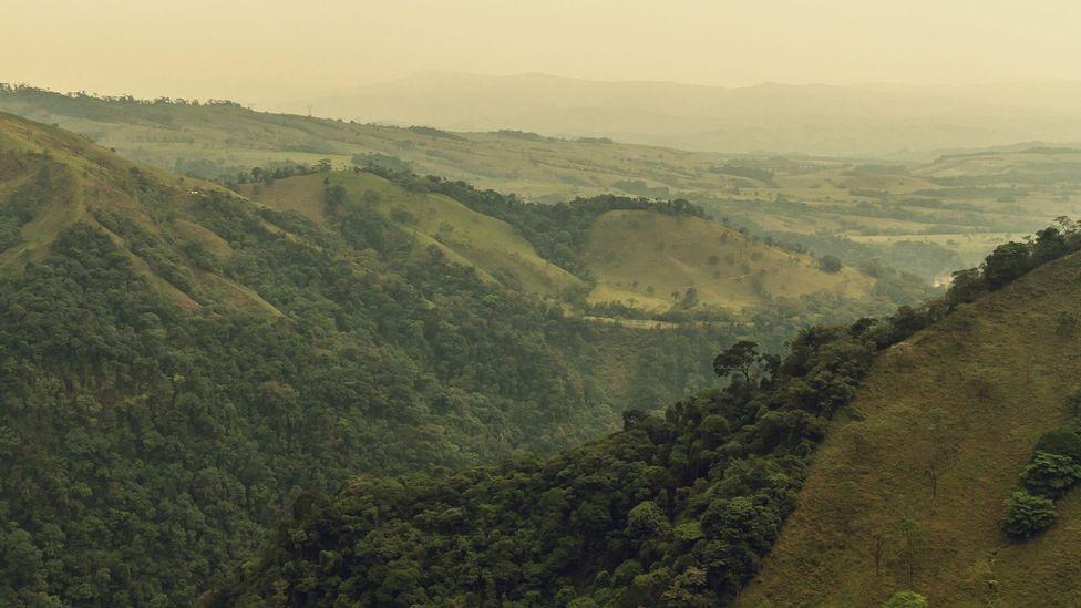 Colombian jungle and hills (Credit: Sergio Fabara)