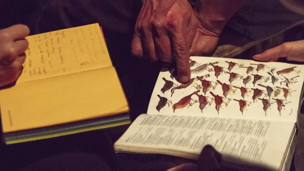 The naturalists consult textbooks in case they have discovered an entirely new species (Credit: Sergio Fabara)