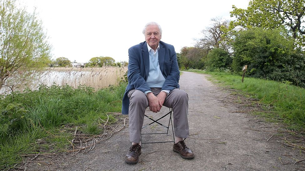 Sir David Attenborough, 92, is reassuringly confident that he'll make it to 100 – and he has no plans to retire (Credit: Getty Images)