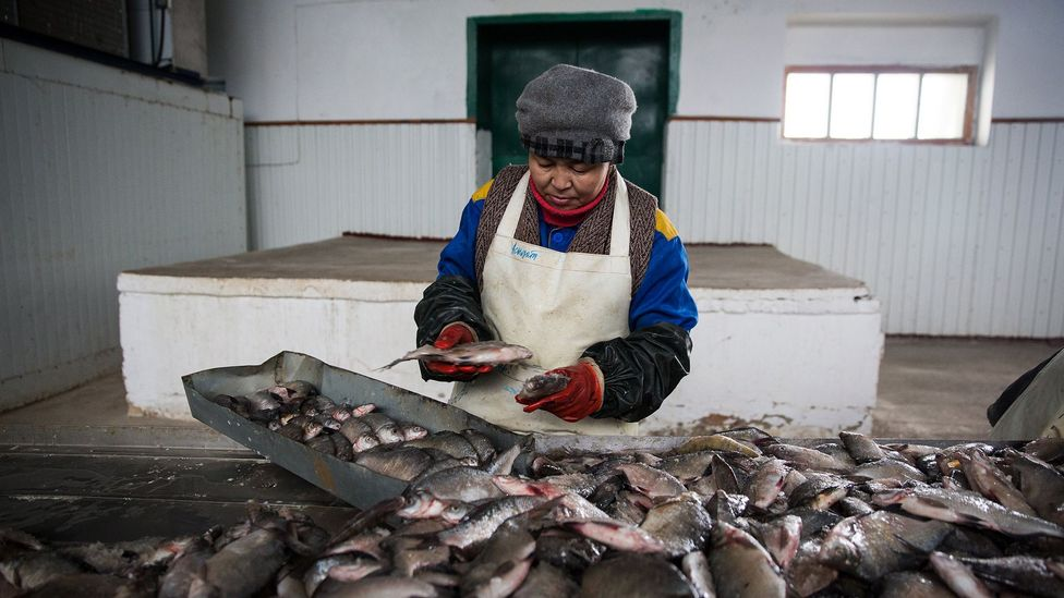 Thanks to the North Aral Sea's return, Aralsk's fishing industry has been revived (Credit: Taylor Weidman)
