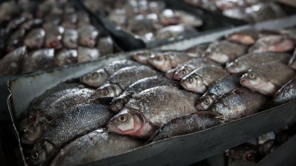 Now, local fishermen in Aralsk can sometimes bring in about £110 worth of fish in a single catch (Credit: Taylor Weidman)
