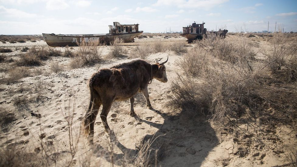 The dust, salt and chemicals now coming off of the Aral Sea's dried-up seabed are causing health problems for locals (Credit: Taylor Weidman)