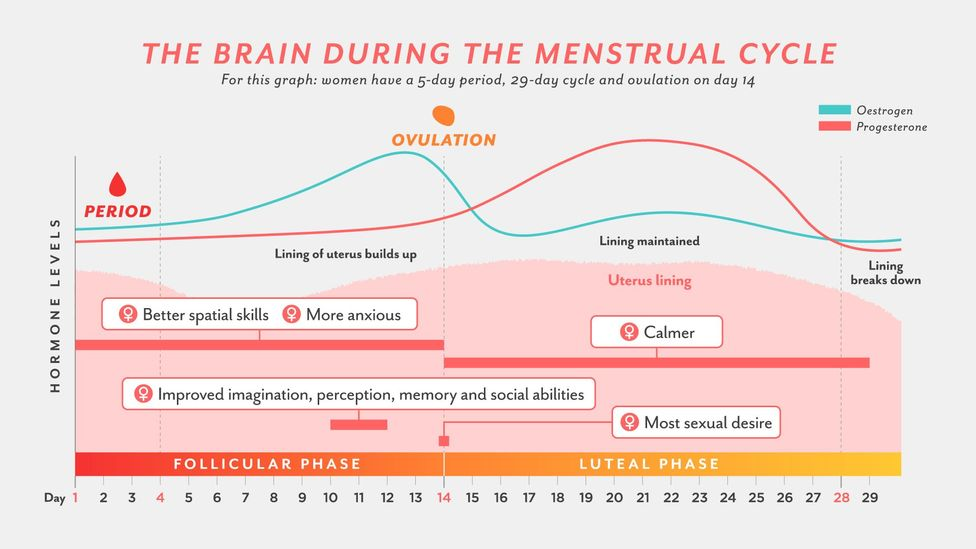 Throughout the menstrual cycle, the brain changes – as does everything from spatial skills to sexual desire (Credit: Yoko Miyagawa/BBC)