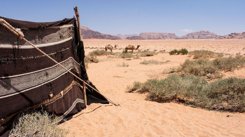 The view from a traditional Bedouin home – for now: the family who lives here moves, with their tent, every couple of months (Credit: Amanda Ruggeri)