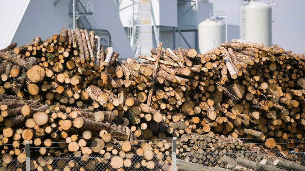 Biomass will only reduce carbon emissions if the fallen trees are replaced with new saplings that can absorb CO2 from the air (Credit: Getty Images)
