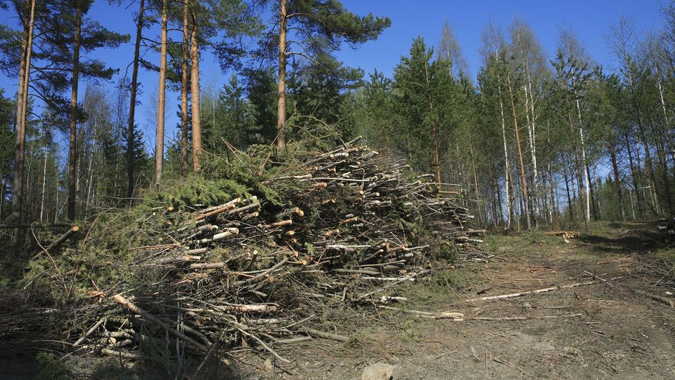 It can take years for newly planted trees to absorb the equivalent amount of carbon released through the burning of wood (Credit: Getty Images)