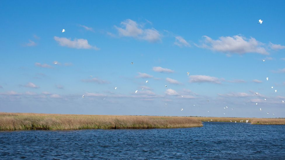Wetlands like Biloxi Marsh, shown here, make up one-third of Louisiana's land (Credit: Amanda Ruggeri)