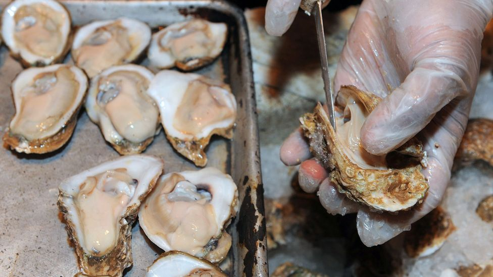Oysters are shucked at Bourbon House, another participating restaurant; to date, the recycling programme has collected 7.3 million pounds (3.3m kg) of shell (Credit: Getty Images)