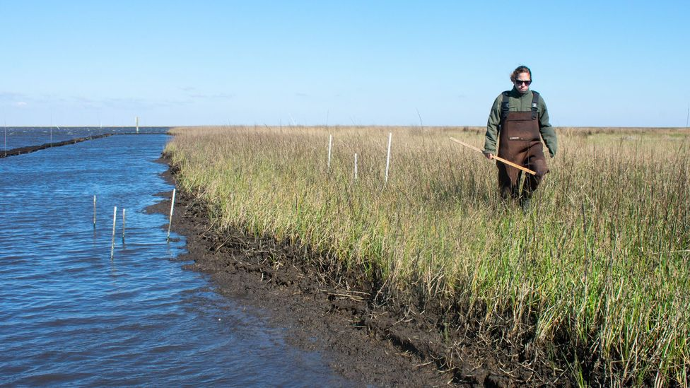 A single acre of wetlands soaks up up to $150,000 (£116,000) worth of pollutants (Credit: Amanda Ruggeri)
