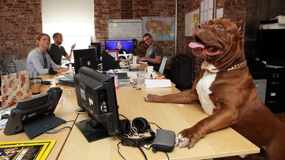 Many companies, especially in the tech industry, have long welcomed animals like dogs and cats into their midst (Credit: Getty Images)