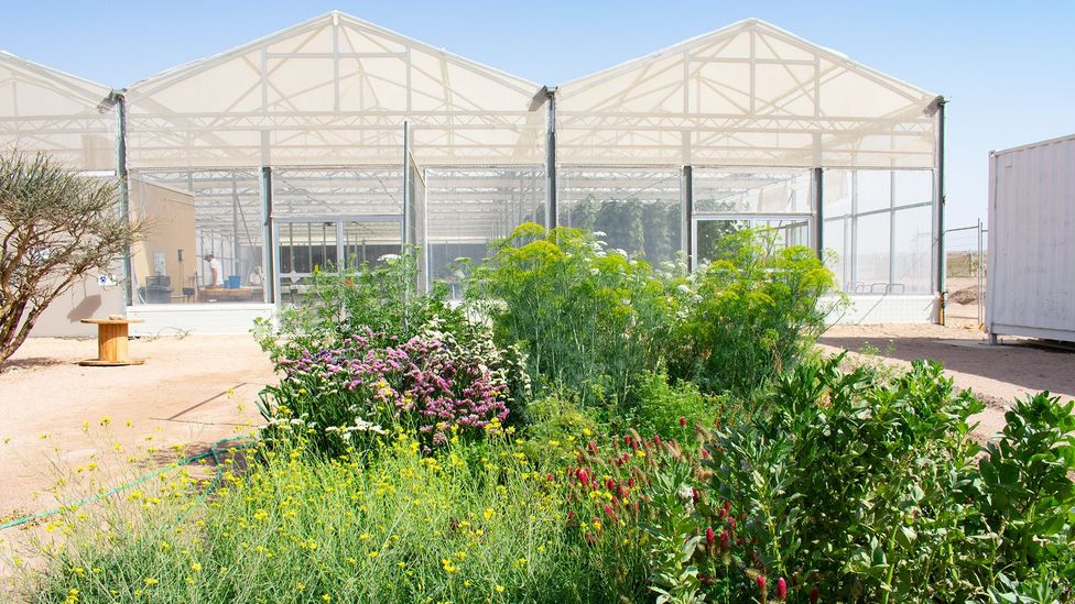 The project tackles challenges of food production, water scarcity and renewable energy at the same time (Credit: Amanda Ruggeri)