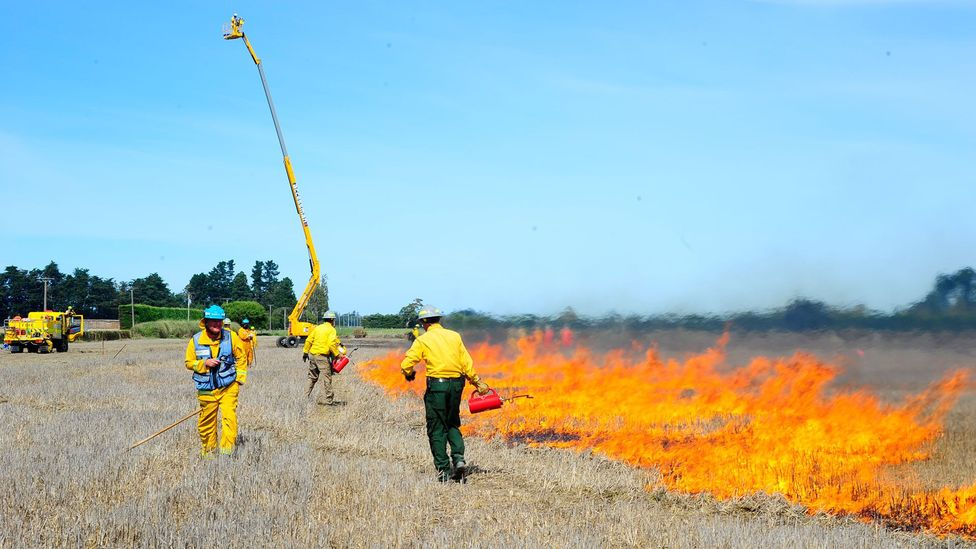 The US Forest Service takes special precautions to ensure that its test fires do not run out of control (Credit: Ian Grob/US Forest Service)