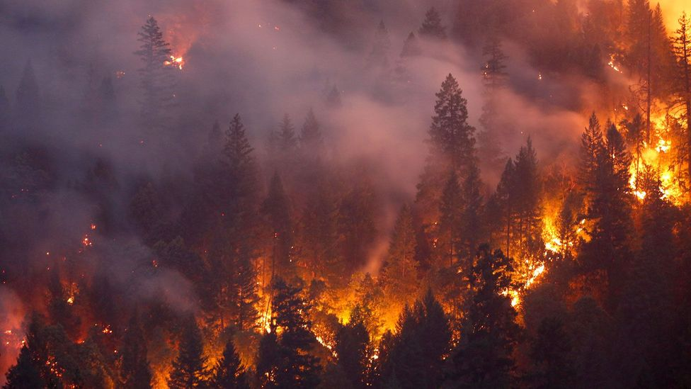 The Carr Fire of July and August 2018 burnt 230,000 acres of California's landscapes (Credit: Terray Sylvester/Getty Images)