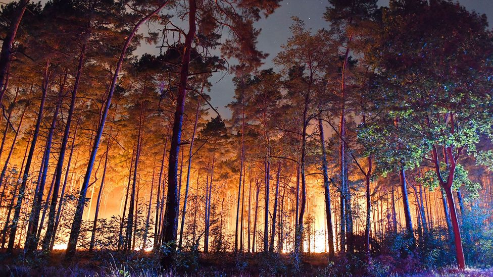 Firefighters in Germany recently battled a forest fire just 50km from Berlin. Scientists worry that such fires will be increasingly common (Credit: Patrick Pleul/AFP/Getty Images)