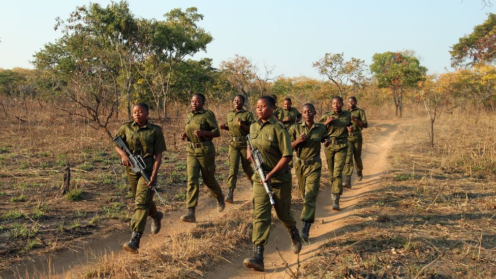 The Akashinga rangers training in the field; they often sing as they run (Credit: Rachel Nuwer)