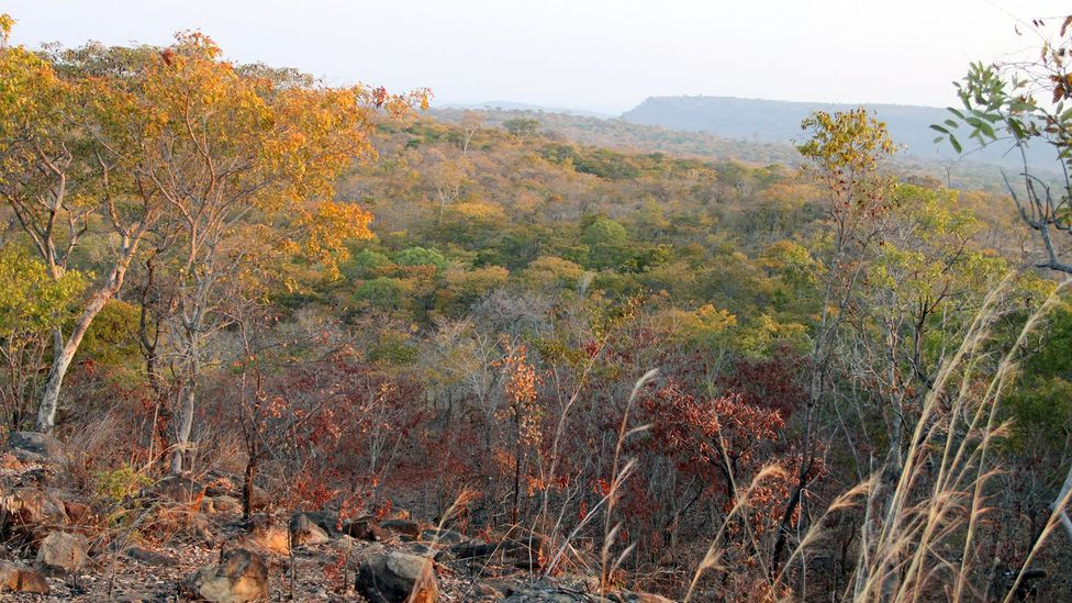 The Lower Zambezi Valley is home to 11,000 elephants, but they are at an acute risk of poaching (Credit: Rachel Nuwer)