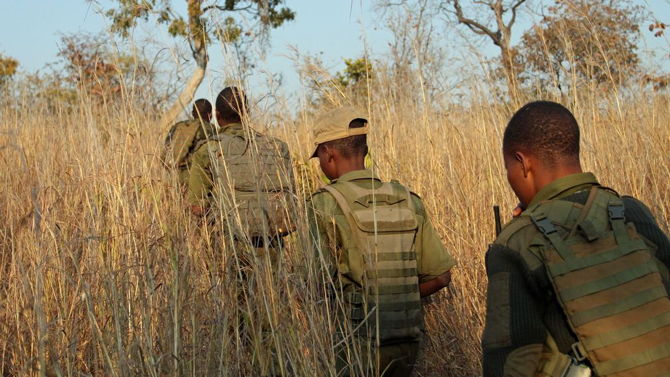 The Akashinga rangers often undertake rugged patrols, covering 12 miles or more every day (Credit: Rachel Nuwer)