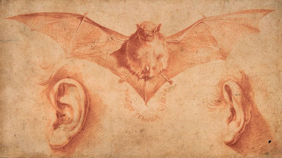Ribera's A Bat and Two Ears (early 1620s) contains an inscrutable symbolism (Credit: The Metropolitan Museum of Art/Art Resource/ Scala, Florence)