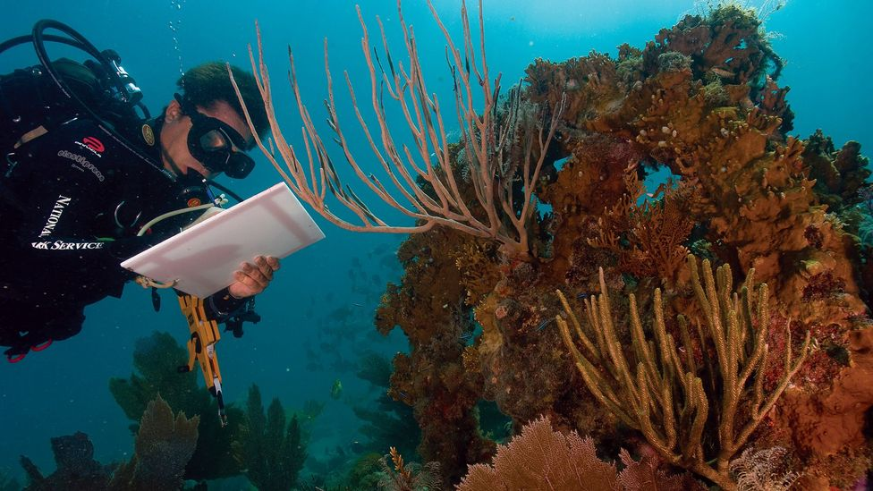 …than an image like this one, which shows a real person doing research on climate change's impact on the coral (Credit: NPS)