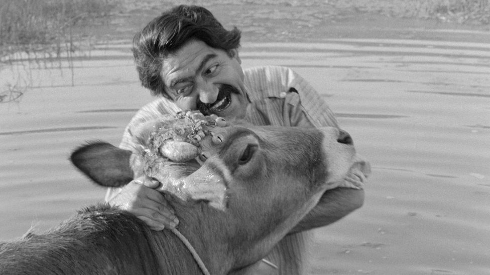 The Cow, by Dariush Mehrjui, was smuggled out of Iran where it won the critics' prize at the 1971 Venice Film Festival (Credit: Alamy)