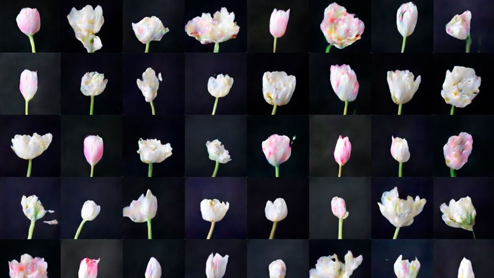 Anna Ridler took thousands of photos of tulips and generated a video of them blooming, which is controlled by the fluctuation in the price of bitcoin (Credit: Anna Ridler)