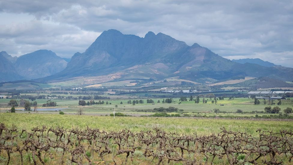 Shallow vleie (marshes) form in the Boland region in the Western Cape (Credit: Jurie Senekal)
