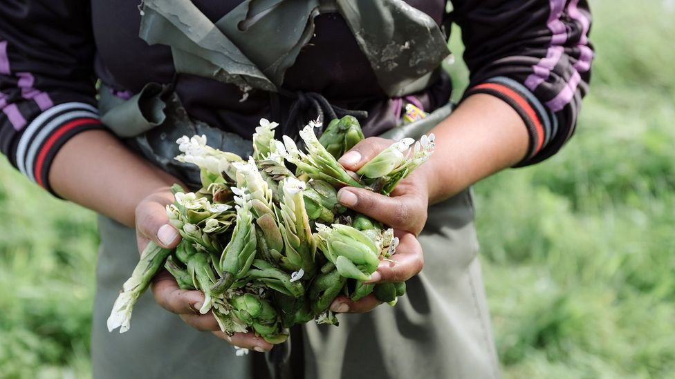 Waterblommetjies are now also farmed commercially – albeit on a small scale (Credit: Jurie Senekal)