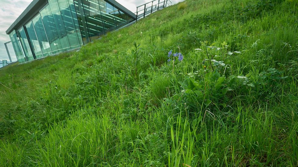 Planting grass and other vegetation on roofs can help form a 'green corridor' linking larger reserves and parks (Credit: Getty Images)