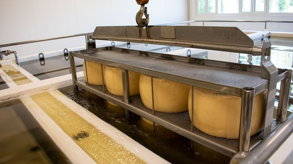 After they are moulded, the wheels of Parmigiano-Reggiano are pressed to remove any excess water (Credit: Amanda Ruggeri)