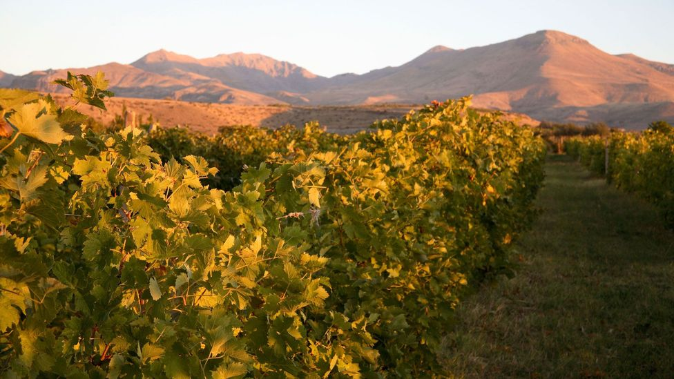 There's hope that Armenia could become the next emergent wine destination (Credit: Paul Carstairs/Alamy)