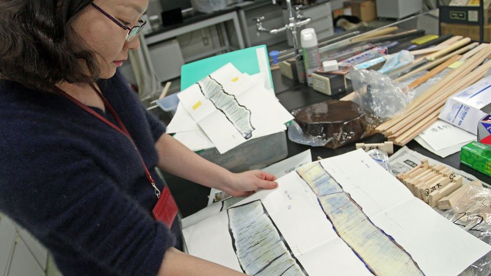 The samples examined by Nakatsuka's team have helped them to build up an unparrelled picture of rainfall over the past 2,600 years (Credit: Rachel Nuwer)