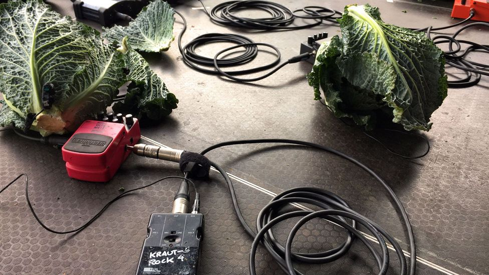 """The group uses distortion pedals and microphones """"to make the vegetables come alive"""" (Credit: Eliot Stein)"""
