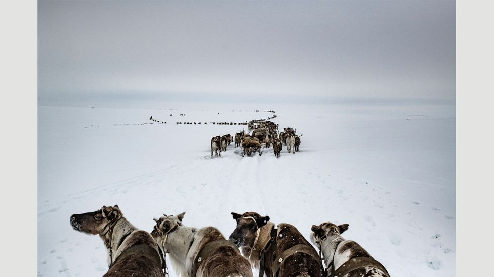 A nomadic herding family move their reindeer from winter pastures to summer pastures, Yamal Peninsula, Russia, April 2018 (Credit: Yuri Kozyrev – NOOR for Fondation Carmignac)