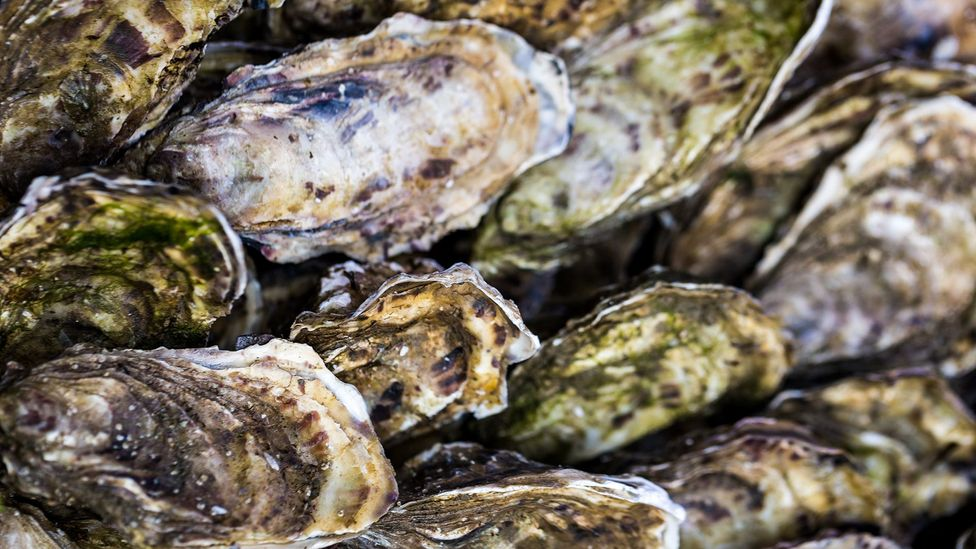 Filter feeders such as oysters are particularly sensitive to levels of pollution (Credit: Getty Images)