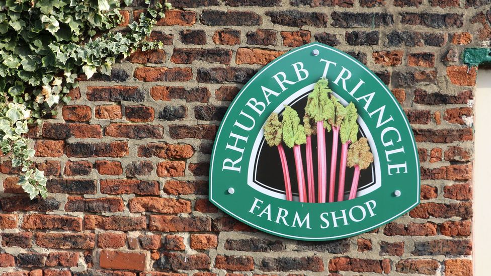 West Yorkshire, England, is home to the 'Rhubarb Triangle', a 23-sq-km area where farmers employ a unique growing technique (Credit: Mike MacEacheran)